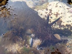 Sea Slug!